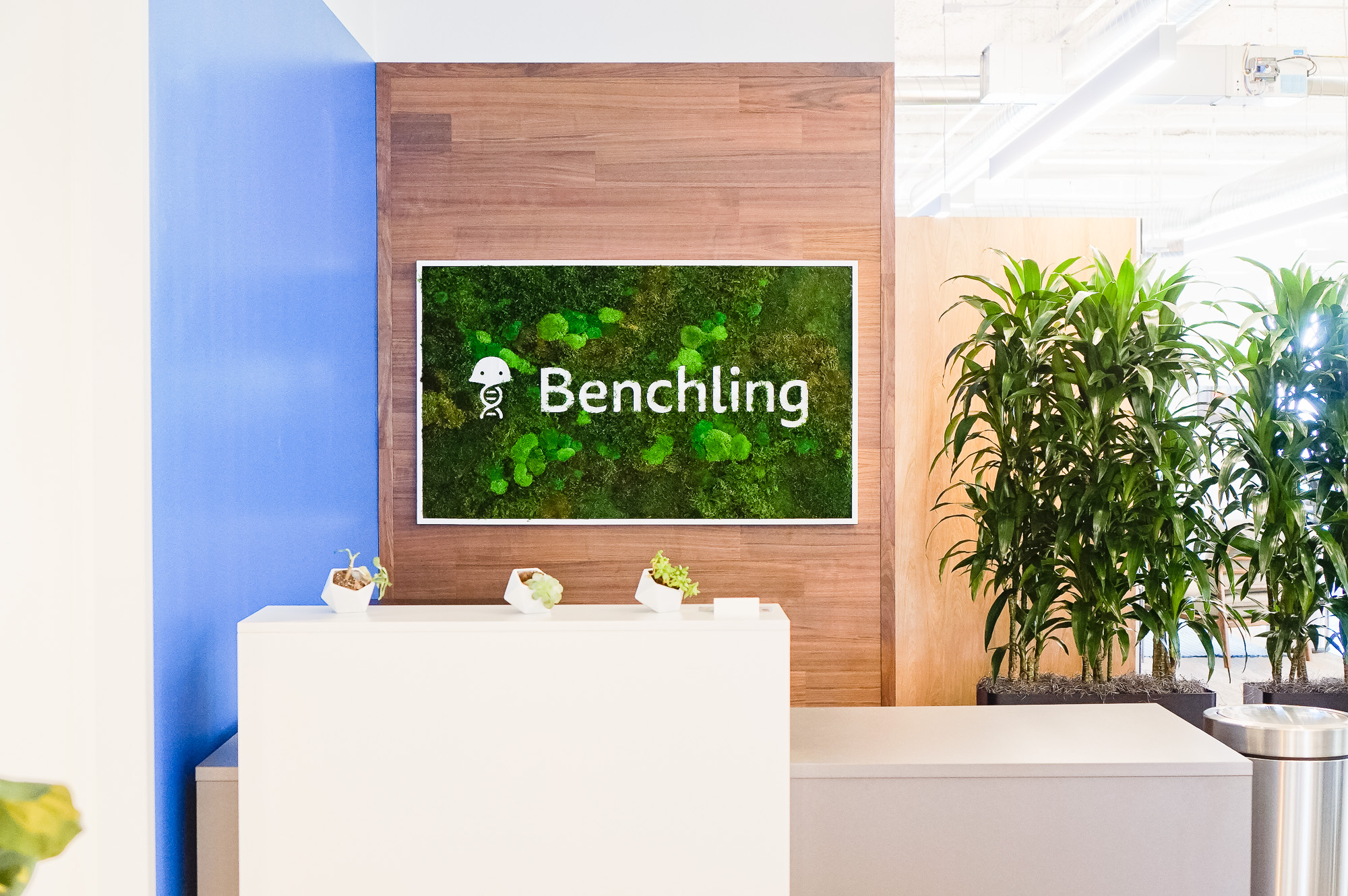 Moss-filled, framed box sign with white logo on walnut plank wall for the San Francisco office of Benchling, a unified platform to accelerate, measure, and forecast R&D from discovery through bioprocessing.