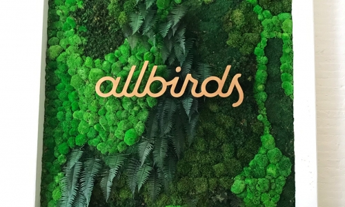 Light wood script sign on living moss wall for Allbirds, a San Francisco-based startup aimed at designing environmentally friendly footwear.