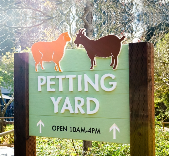 Protected: Oakland Zoo – Petting Yard